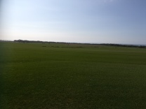 amenity grass