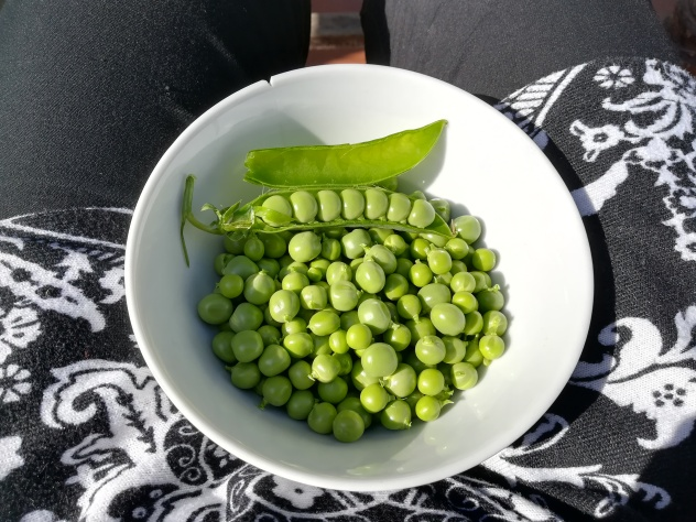 delicious fresh peas