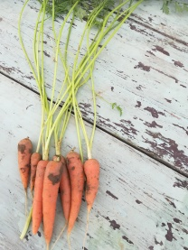 more carrots